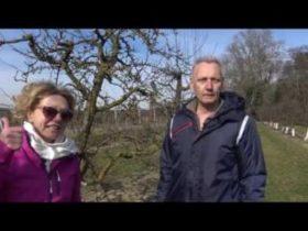 Szilvafa metszése videón